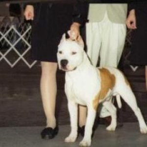 Best Of Winner - May 2009 (Macon Kennel Club) @ 5mths old.
