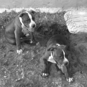 Kilo and his brother