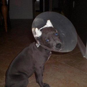 The cone of shame!!